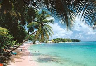 Beach, palm trees, sun